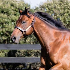 Eigenes Pferd Kostenlos Herunterladen 300x300 - Eigenes Pferd Kostenlos Herunterladen