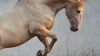 Falbes Pferd Kaufen Für Facebook 390x220 - Falbes Pferd Kaufen Für Facebook