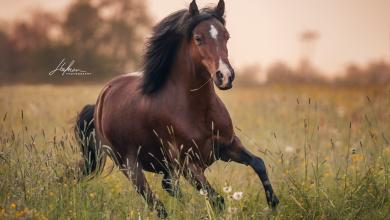 Falbes Pferd Kaufen Für Whatsapp 390x220 - Falbes Pferd Kaufen Für Whatsapp