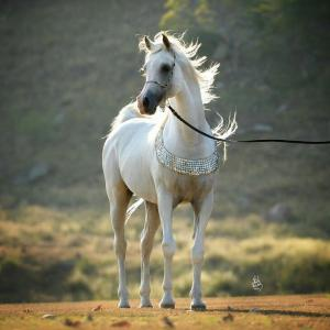 Fantasy Bilder Pferde 300x300 - Fantasy Bilder Pferde