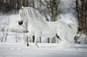 Fantasy Pferde Bilder Für Facebook 300x199 - Fantasy Pferde Bilder Für Facebook