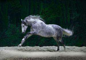 Fantasy Pferde Bilder Für Whatsapp 300x208 - Fantasy Pferde Bilder Für Whatsapp