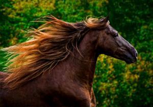 Fantasy Pferde Bilder Kostenlos Herunterladen 300x210 - Fantasy Pferde Bilder Kostenlos Herunterladen