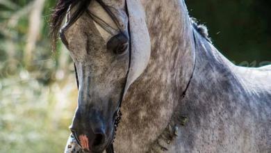 Fest Der Pferde 390x220 - Fest Der Pferde
