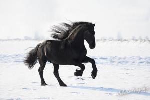 Fliehendes Pferd Für Facebook 300x200 - Fliehendes Pferd Für Facebook