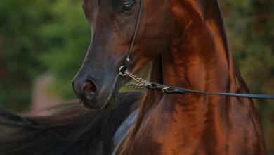 Foto Pferd Für Facebook 390x220 - Foto Pferd Für Facebook
