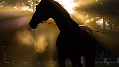 Foto Pferd Kostenlos Downloaden 390x220 - Foto Pferd Kostenlos Downloaden