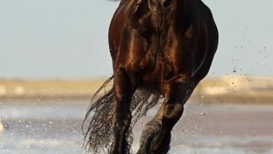 Foto Pferd Kostenlos Herunterladen 390x220 - Foto Pferd Kostenlos Herunterladen