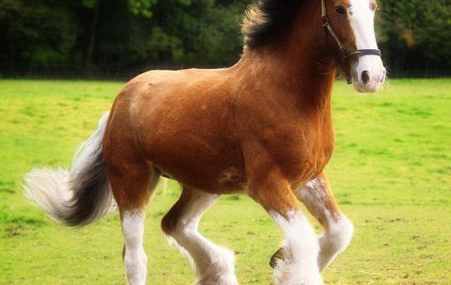 Videos Von Pferden