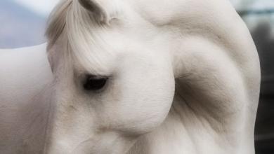 Freiberger Pferde Kaufen Für Facebook 390x220 - Freiberger Pferde Kaufen Für Facebook