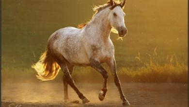 Freiberger Pferde Kaufen Kostenlos Herunterladen 390x220 - Freiberger Pferde Kaufen Kostenlos Herunterladen