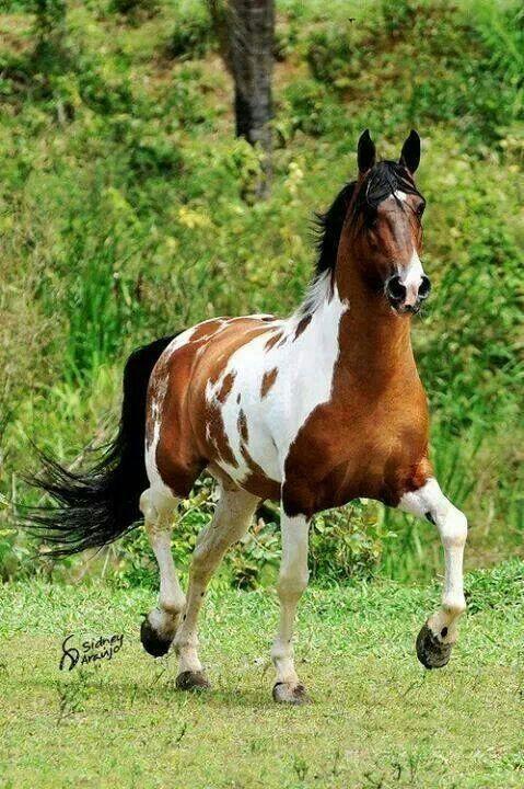 Freiberger Pferde Kaufen - Freiberger Pferde Kaufen
