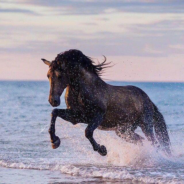 ausdruckbilder pferde  bilder und sprüche für whatsapp
