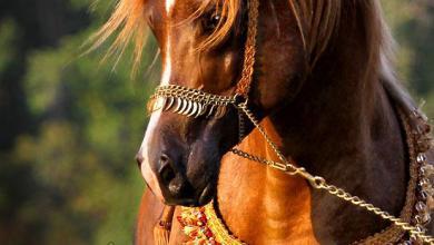Günstige Pferde 390x220 - Günstige Pferde
