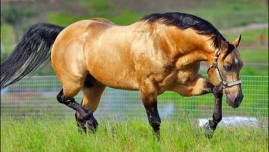 Günstige Pferde Kaufen Kostenlos Herunterladen 390x220 - Günstige Pferde Kaufen Kostenlos Herunterladen