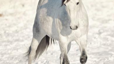 Geburtstag Pferd Bilder Für Whatsapp 390x220 - Geburtstag Pferd Bilder Für Whatsapp