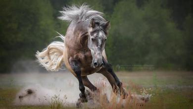 Gemälde Pferd Kostenlos Herunterladen 390x220 - Gemälde Pferd Kostenlos Herunterladen