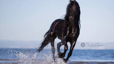 Gemalte Pferde Bilder Kostenlos Herunterladen 390x220 - Gemalte Pferde Bilder Kostenlos Herunterladen