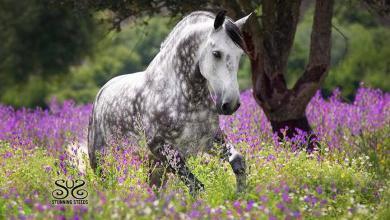 Gemalte Pferdeköpfe Für Whatsapp 390x220 - Gemalte Pferdeköpfe Für Whatsapp