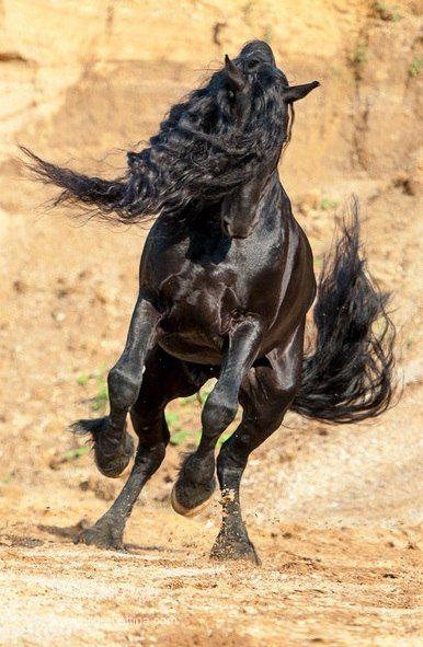 Gnadenhof Für Pferde Kostenlos Downloaden - Gnadenhof Für Pferde Kostenlos Downloaden