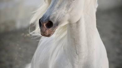 Gnadenhof Pferde 390x220 - Gnadenhof Pferde