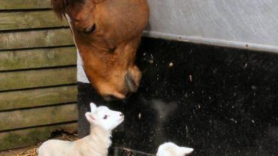 Google Pferde Bilder Für Whatsapp 390x220 - Google Pferde Bilder Für Whatsapp