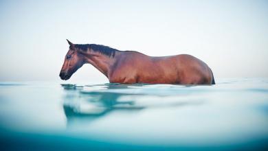 Google Pferdebilder Kostenlos Herunterladen 390x220 - Google Pferdebilder Kostenlos Herunterladen