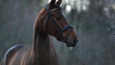 Gratis Pferde Kostenlos Herunterladen 390x220 - Gratis Pferde Kostenlos Herunterladen