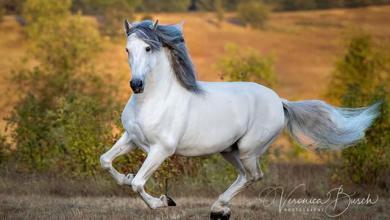 Große Pferde Kaufen Kostenlos Herunterladen 390x220 - Große Pferde Kaufen Kostenlos Herunterladen