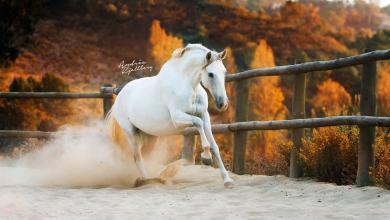 Hübsche Pferde Bilder 390x220 - Hübsche Pferde Bilder