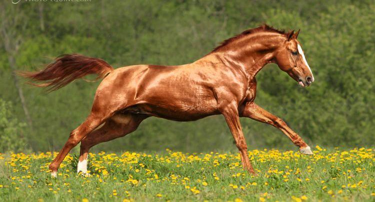 haflinger pferde bilder kostenlos herunterladen  bilder