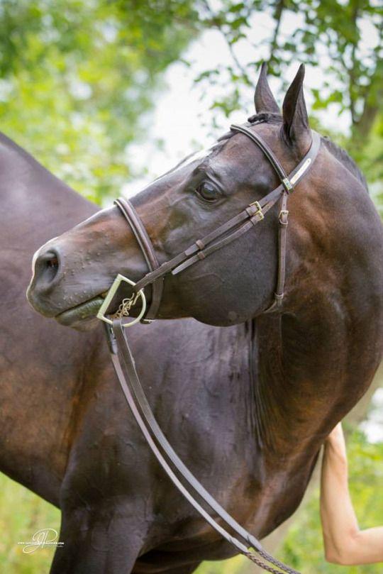 haflinger pferde kostenlos downloaden  bilder und sprüche
