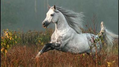 Hannoveraner Pferd Kostenlos Herunterladen 390x220 - Hannoveraner Pferd Kostenlos Herunterladen