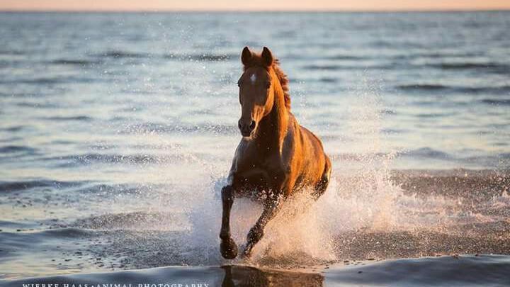 hintergrundbilder pferde am strand kostenlos herunterladen