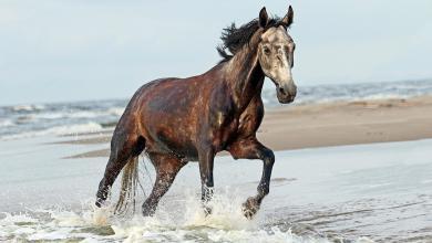Hintergrundbilder Pferde Kostenlos 390x220 - Hintergrundbilder Pferde Kostenlos
