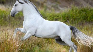 Hintergrundbilder Pferde Kostenlos Herunterladen 390x220 - Hintergrundbilder Pferde Kostenlos Herunterladen