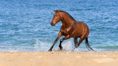 Hintergrundbilder Pferde Kostenlos Kostenlos Herunterladen 390x220 - Hintergrundbilder Pferde Kostenlos Kostenlos Herunterladen