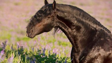 Hintergrundbilder Von Pferden Für Facebook 390x220 - Hintergrundbilder Von Pferden Für Facebook