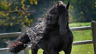 Holsteiner Pferd Kostenlos Downloaden 390x220 - Holsteiner Pferd Kostenlos Downloaden