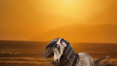 Irland Pferde Kaufen Für Facebook 390x220 - Irland Pferde Kaufen Für Facebook