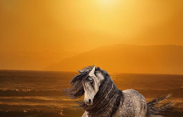 Irland Pferde