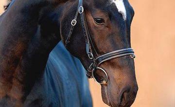 Isländer Pferde Bilder 360x220 - Isländer Pferde Bilder