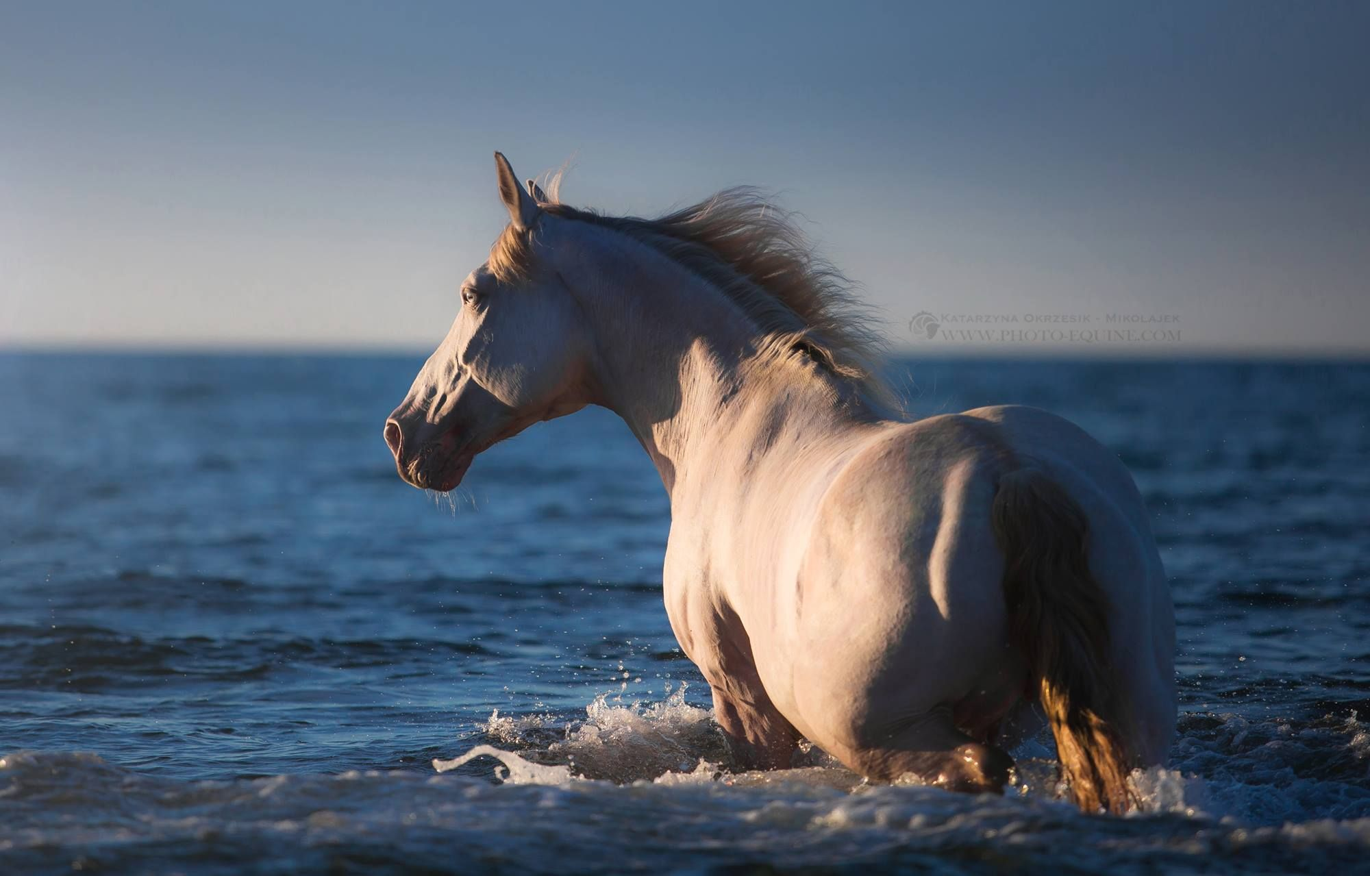 coole pferde bilder kostenlos  test blog