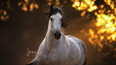 Isländer Pferde Für Facebook 390x220 - Isländer Pferde Für Facebook