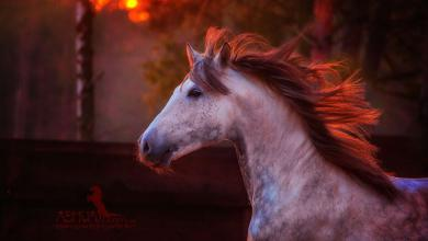 Kathmann Pferde Verkauf Für Facebook 390x220 - Kathmann Pferde Verkauf Für Facebook