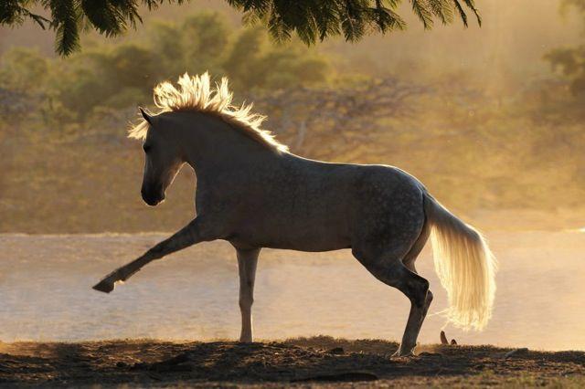 Kathmann Pferde Verkauf Kostenlos Herunterladen - Kathmann Pferde Verkauf Kostenlos Herunterladen