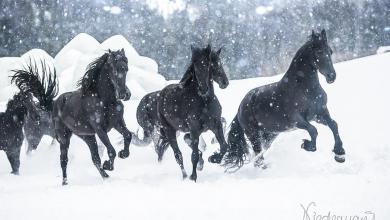 Kaufvertrag Pferd 390x220 - Kaufvertrag Pferd