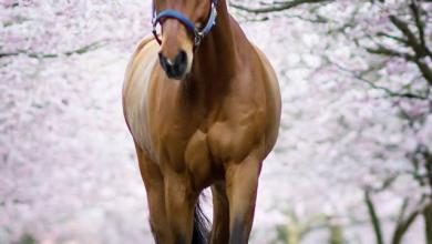Klein Pferde Kaufen Für Facebook 390x220 - Klein Pferde Kaufen Für Facebook