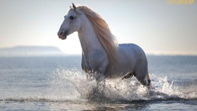 Kleine Pferde Bilder 390x220 - Kleine Pferde Bilder