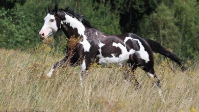 Kleine Pferde Bilder Für Facebook 390x220 - Kleine Pferde Bilder Für Facebook